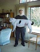 Gato de 40 quilos