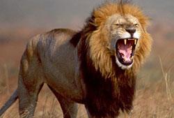 Rei das Selvas