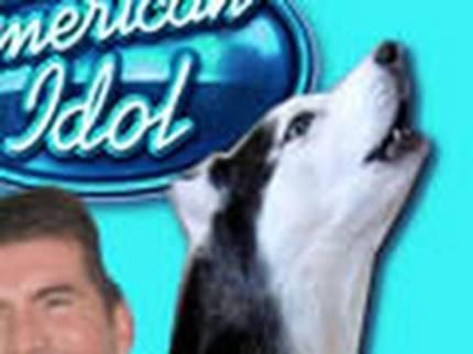 cão cantor