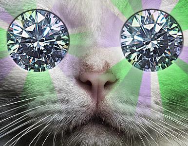 gato de sorte