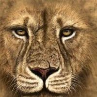 política do leão