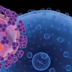 Estudo de vírus