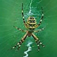 sob domínio da vespa