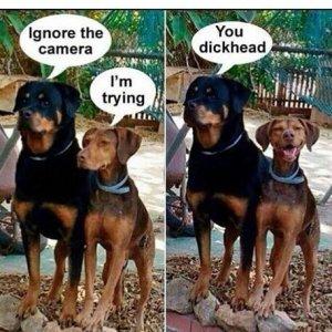 animais fotogênicos